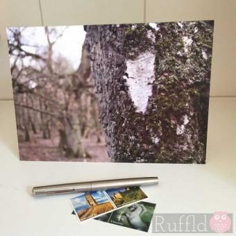 Card - Silver Bark
