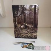Card - Fallen Branch
