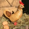 Chicken in Red Spotty Cowboy Boots