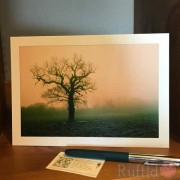 Card - Oak in the Fog