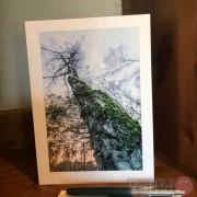 Card - Silver Birch