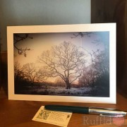 Card - Sunset in Wintry Woods